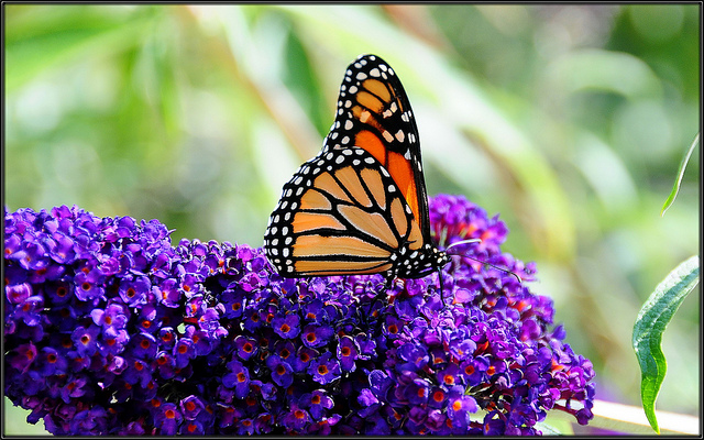 Image result for just when the caterpillar thought the world was over it became a butterfly