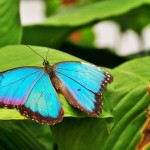Image of a butterfly